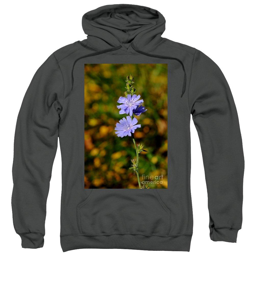 Blue Sweatshirt featuring the photograph Blue Chicory 2 by Malgorzata Wryk-Igras