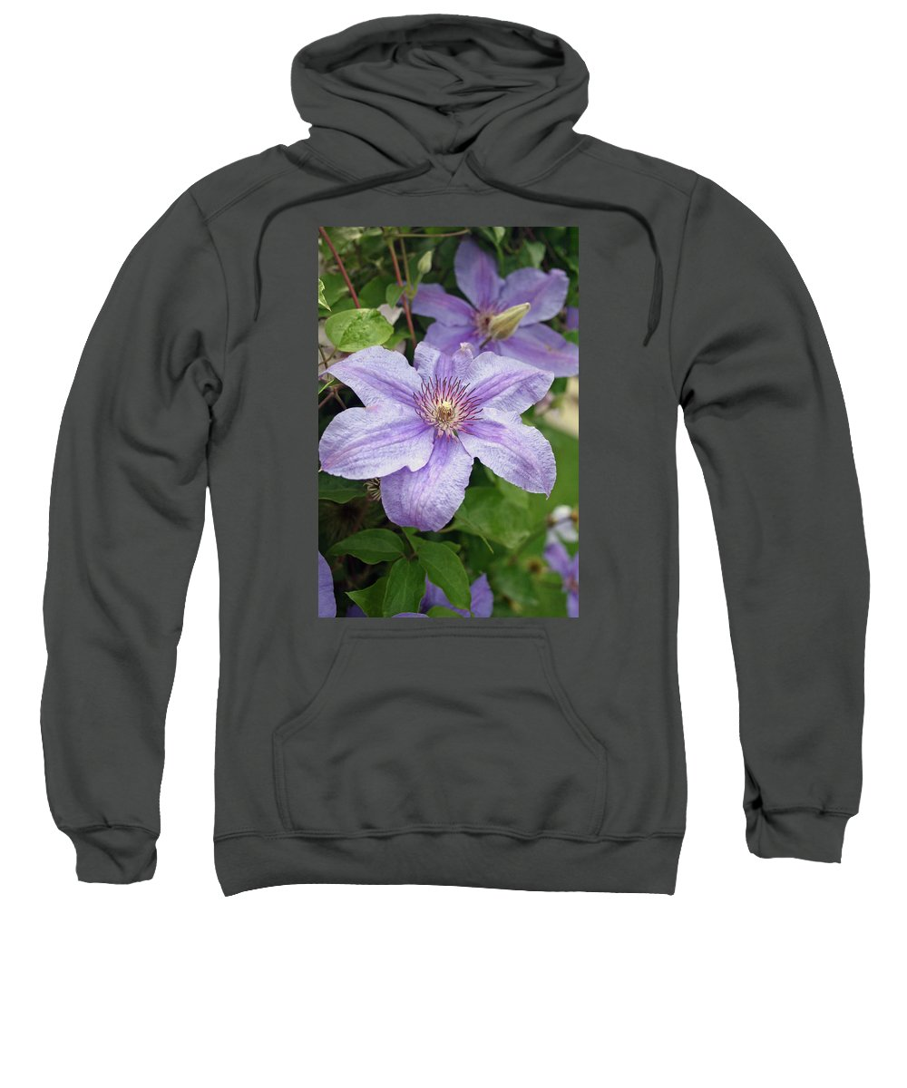 Clematis Sweatshirt featuring the photograph Blue Clematis by Margie Wildblood