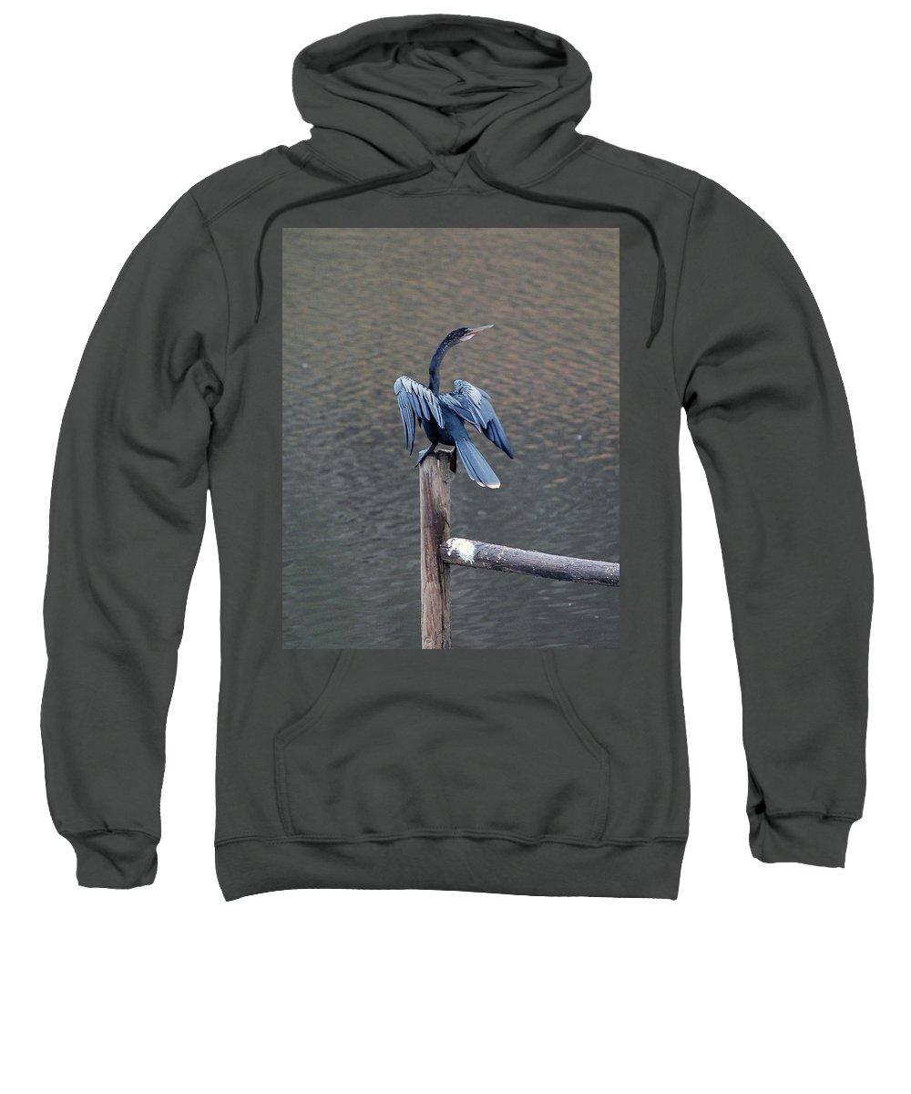 Bird Sweatshirt featuring the photograph Blue Darter by Robert Meanor