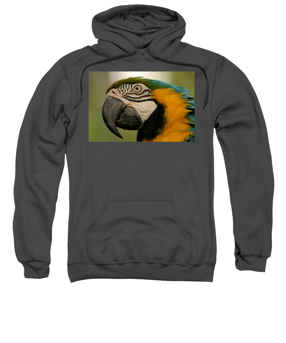Parrot Sweatshirt featuring the photograph Blue Gold Macaw South America by Ralph A Ledergerber-Photography