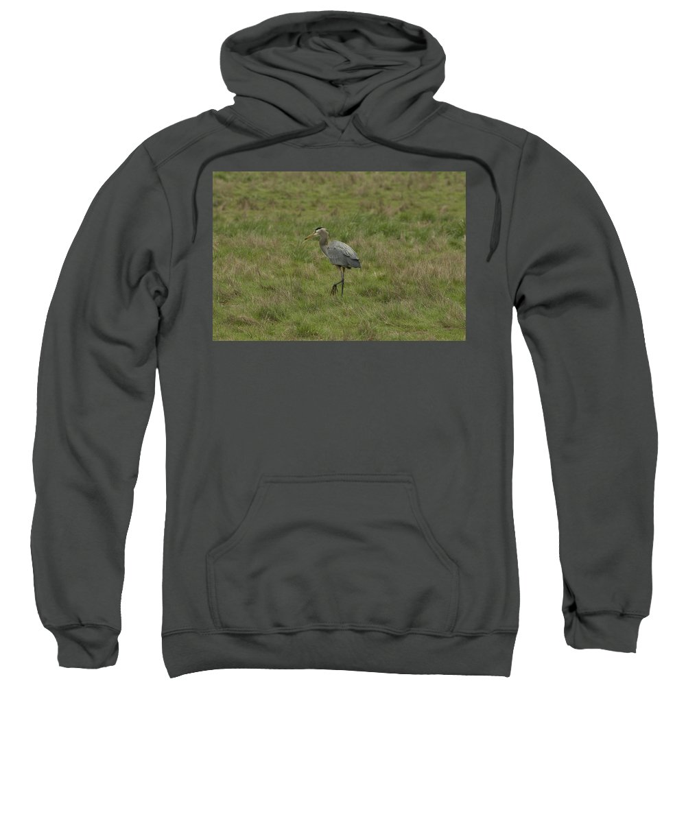Bird Sweatshirt featuring the photograph Blue Heron by Sara Stevenson