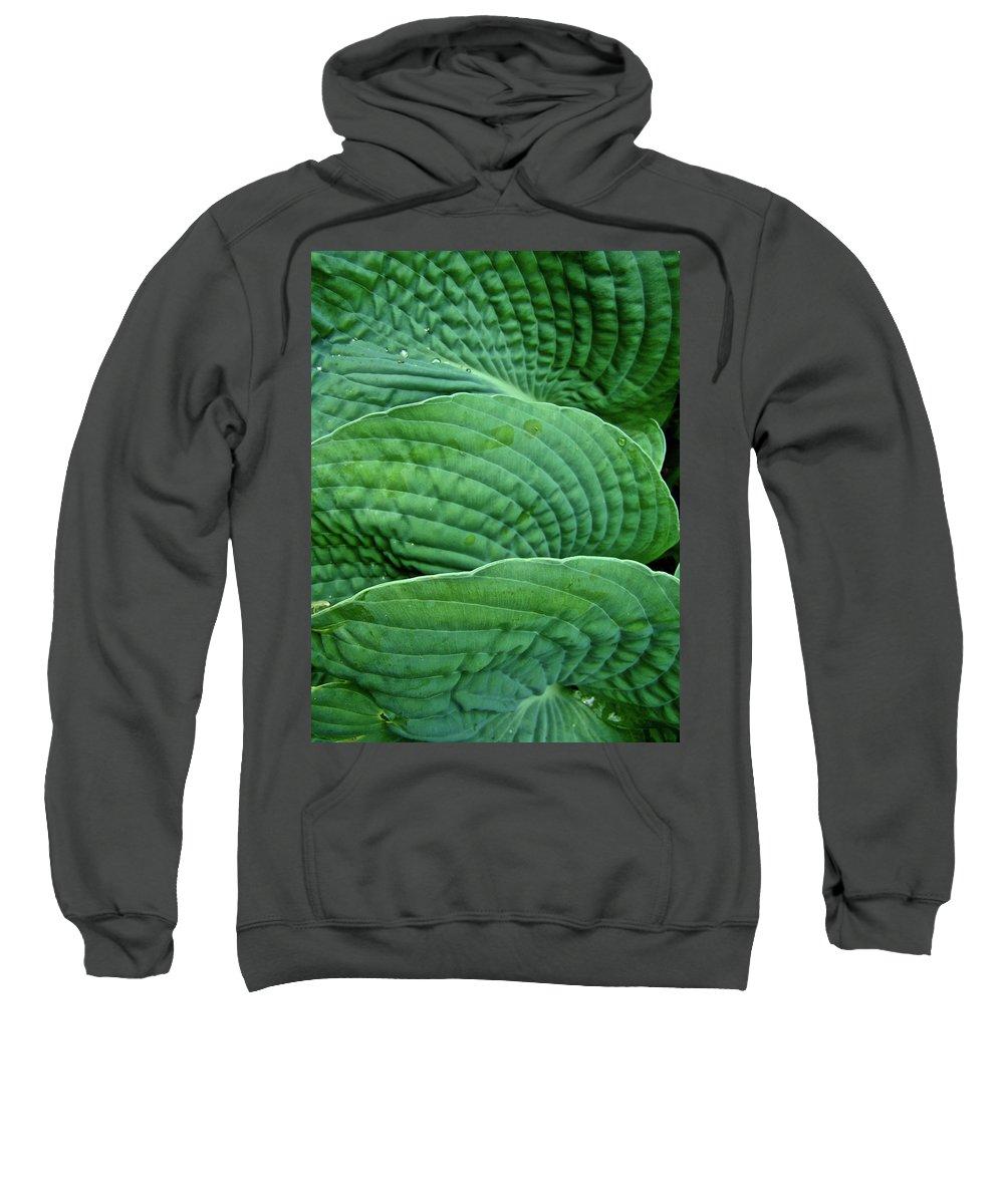 Hosta Sweatshirt featuring the photograph Blue Hosta - Hosta Sieboldiana by Mother Nature