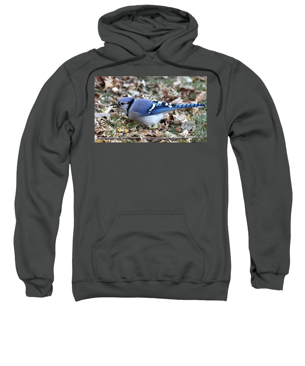 blue Jay Sweatshirt featuring the photograph Blue Jay With A Full Mouth by Lori Tordsen