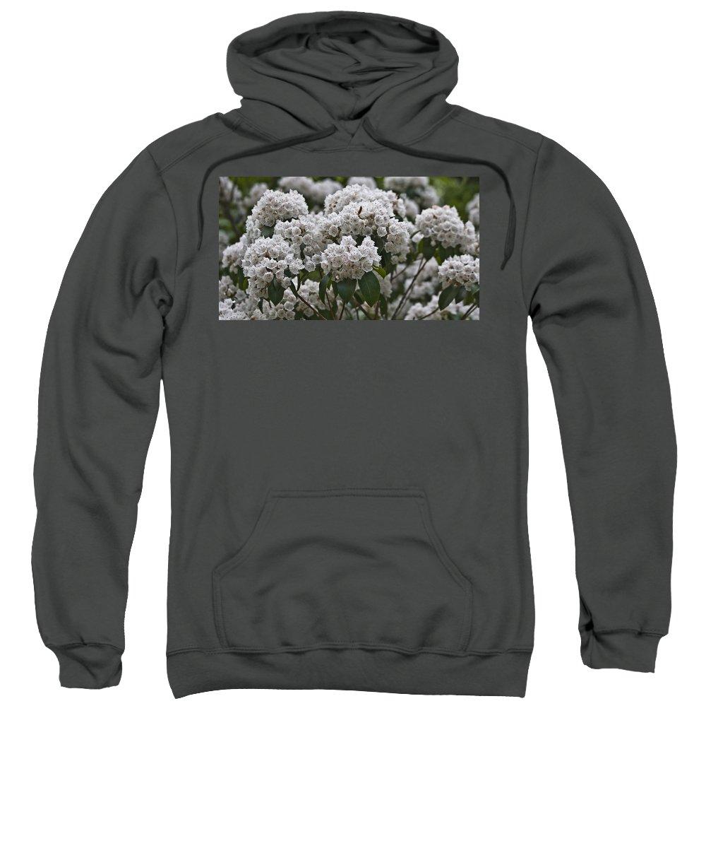 Kalmia Sweatshirt featuring the photograph Blue Ridge Mountain Laurel by Teresa Mucha