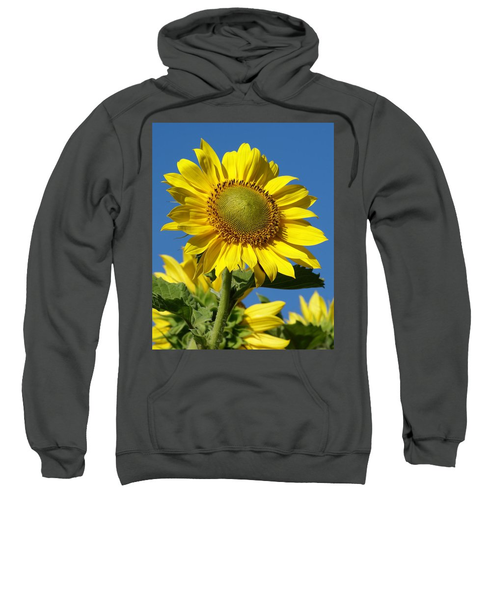 Flowers Sweatshirt featuring the photograph Blue Sky Sunflower Day by Ben Upham III