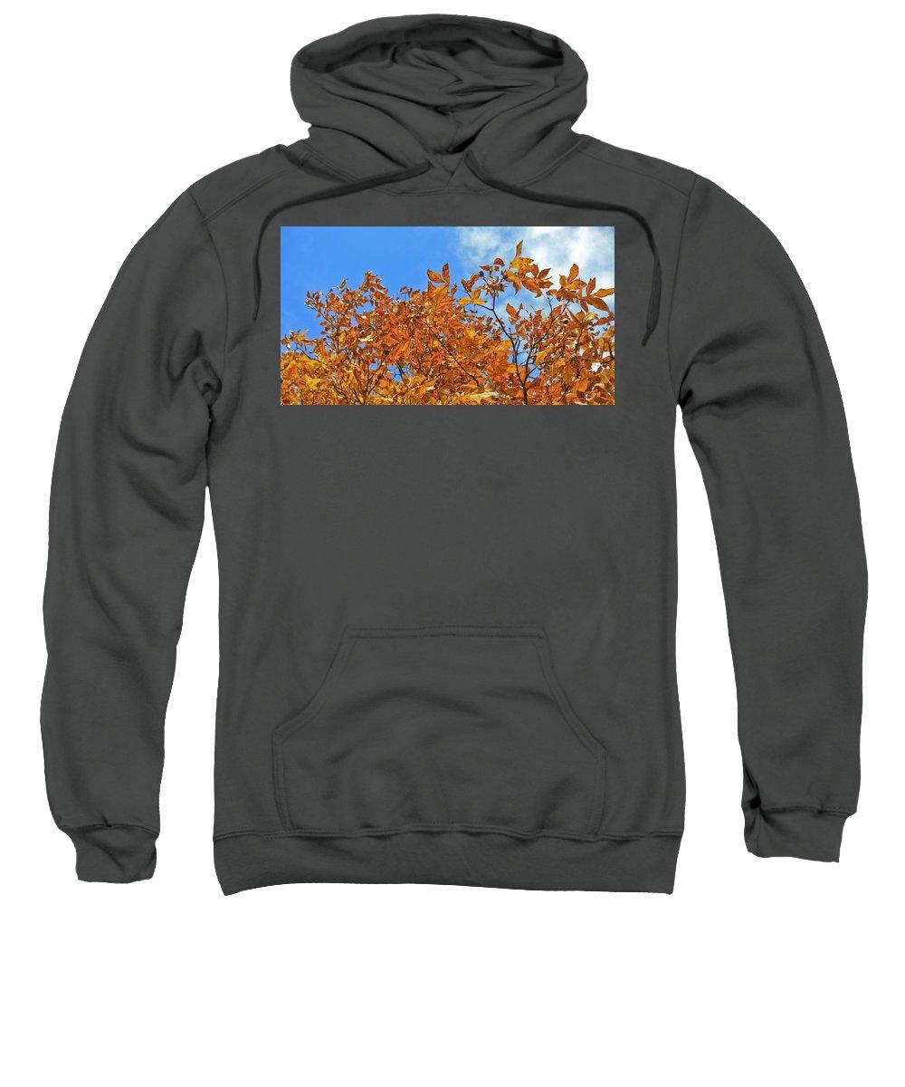 Fall Sweatshirt featuring the photograph Blue Sky by Teresa Mucha