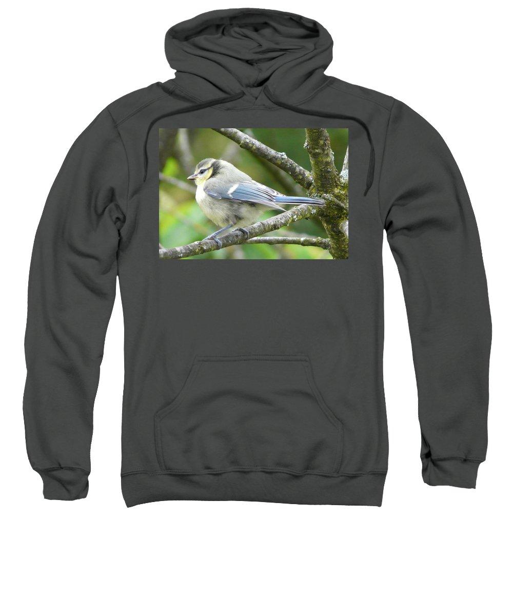 Bird Sweatshirt featuring the photograph Blue Tit by Valerie Ornstein