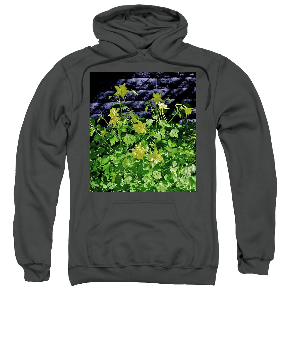Botanical Sweatshirt featuring the photograph Blue Wall Yellow Columbine by Bonnie See
