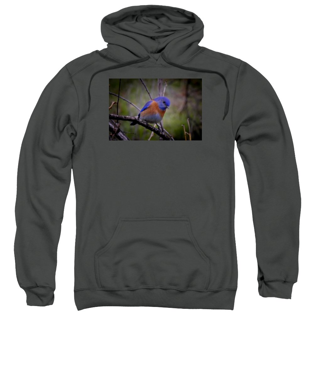 Sweatshirt featuring the photograph Bluebird by Reed Tim