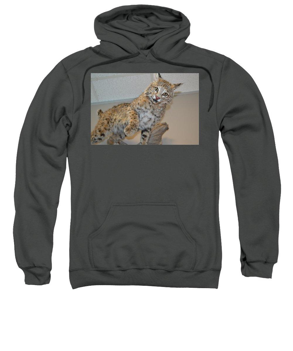Bobcat Sweatshirt featuring the photograph Bobcat by Lynn Jung