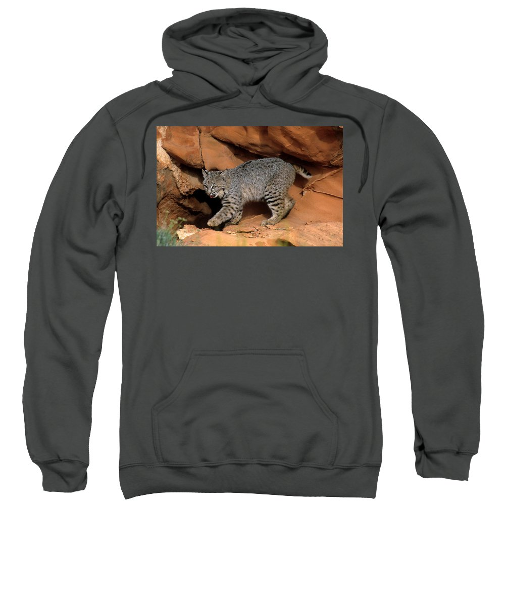 Wildlife Sweatshirt featuring the photograph Bobcat Makes Its Move by Larry Allan