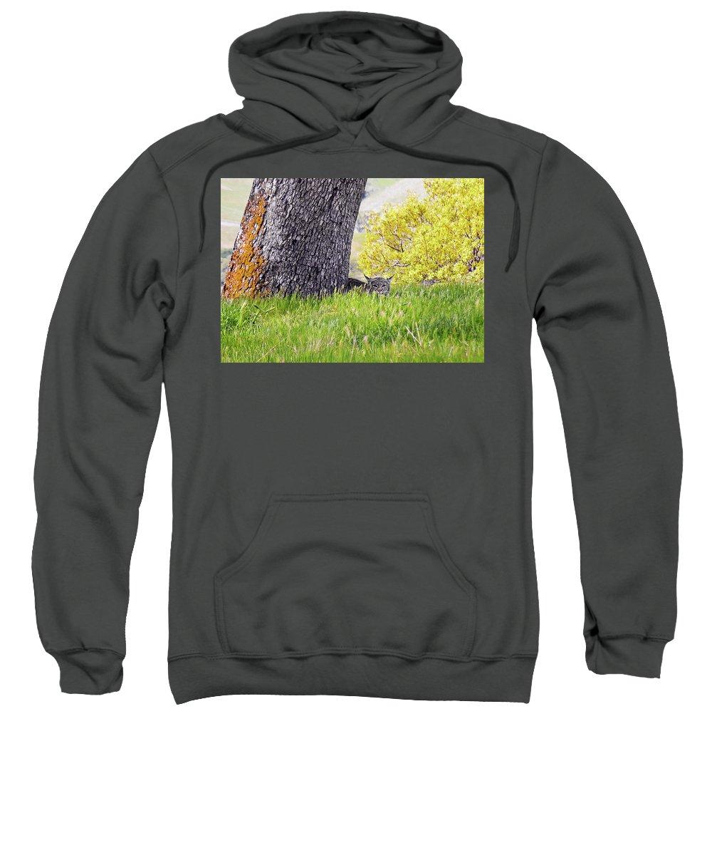 Landscape Sweatshirt featuring the photograph Bobcat Watch by Karen W Meyer