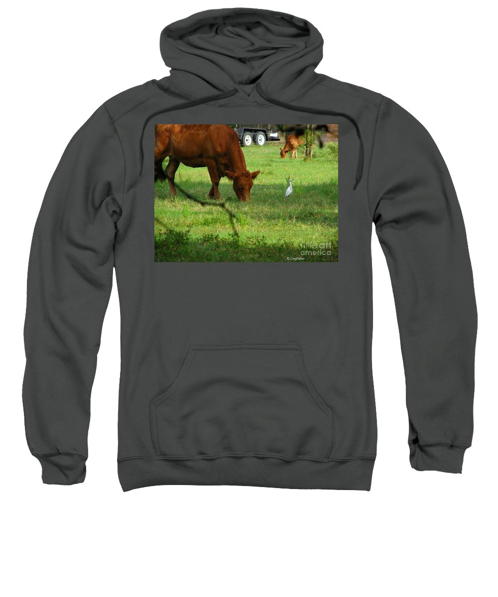 Cows Sweatshirt featuring the photograph Bodyguard by Greg Patzer