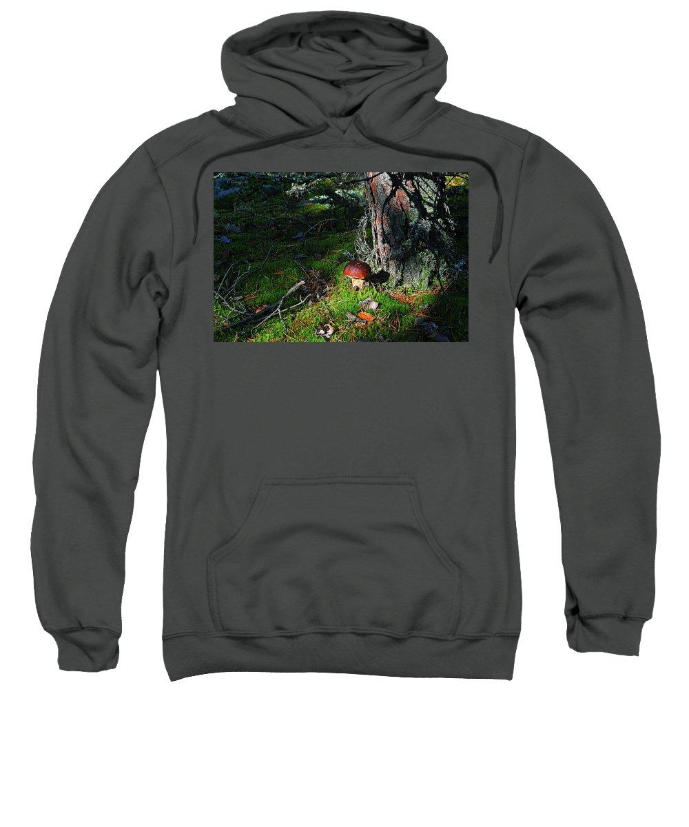 Landscape Forest Mushroom Lithuania Sweatshirt featuring the photograph Boletus Mushroom by George St