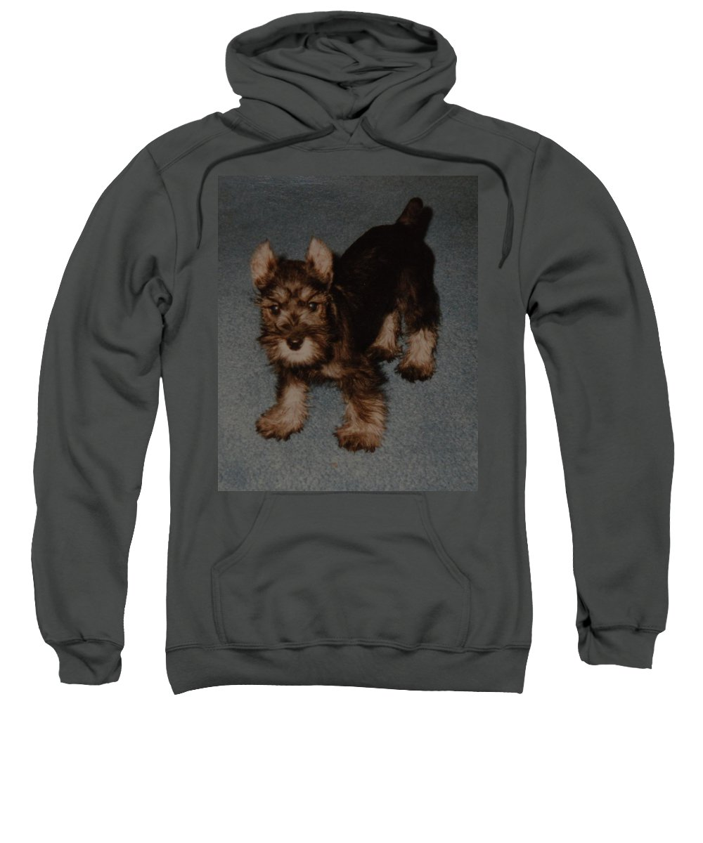 Dog Sweatshirt featuring the photograph Boo Boo by Rob Hans