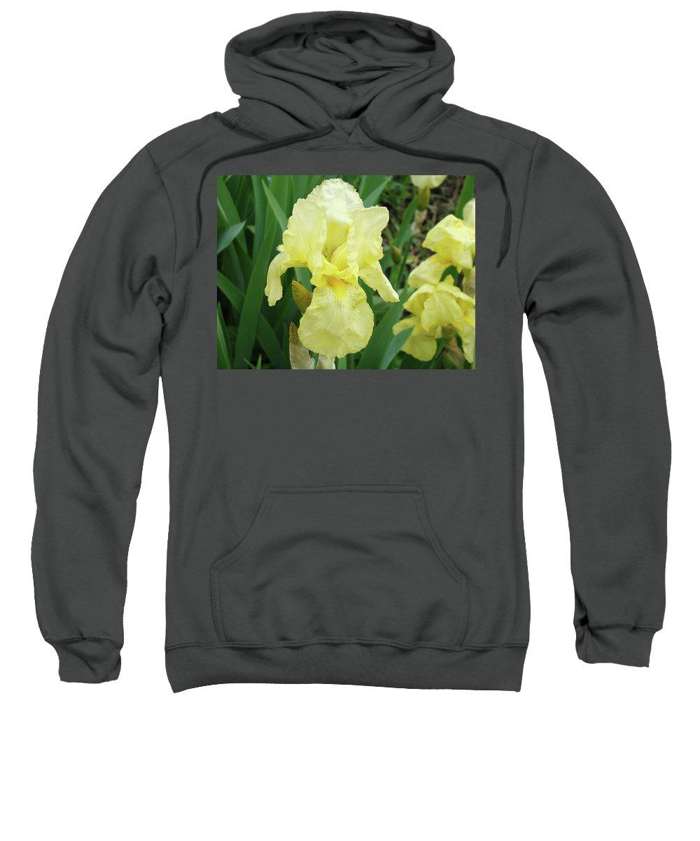 Iris Sweatshirt featuring the photograph Botanical Yellow Iris Flower Summer Floral Art Baslee Troutman by Baslee Troutman