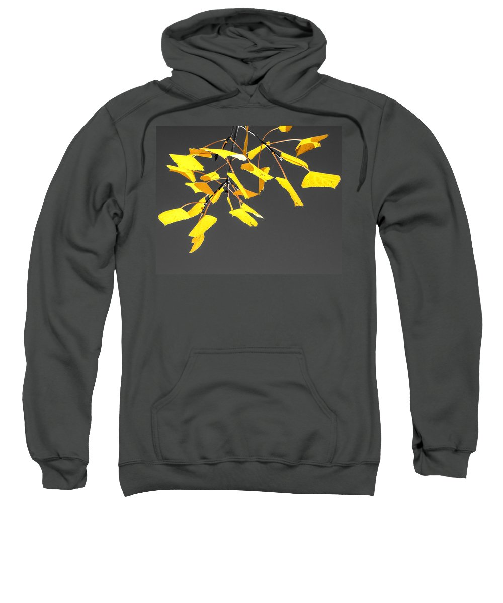 Quaking Sweatshirt featuring the photograph Bountiful Beauty by LeAnne Perry