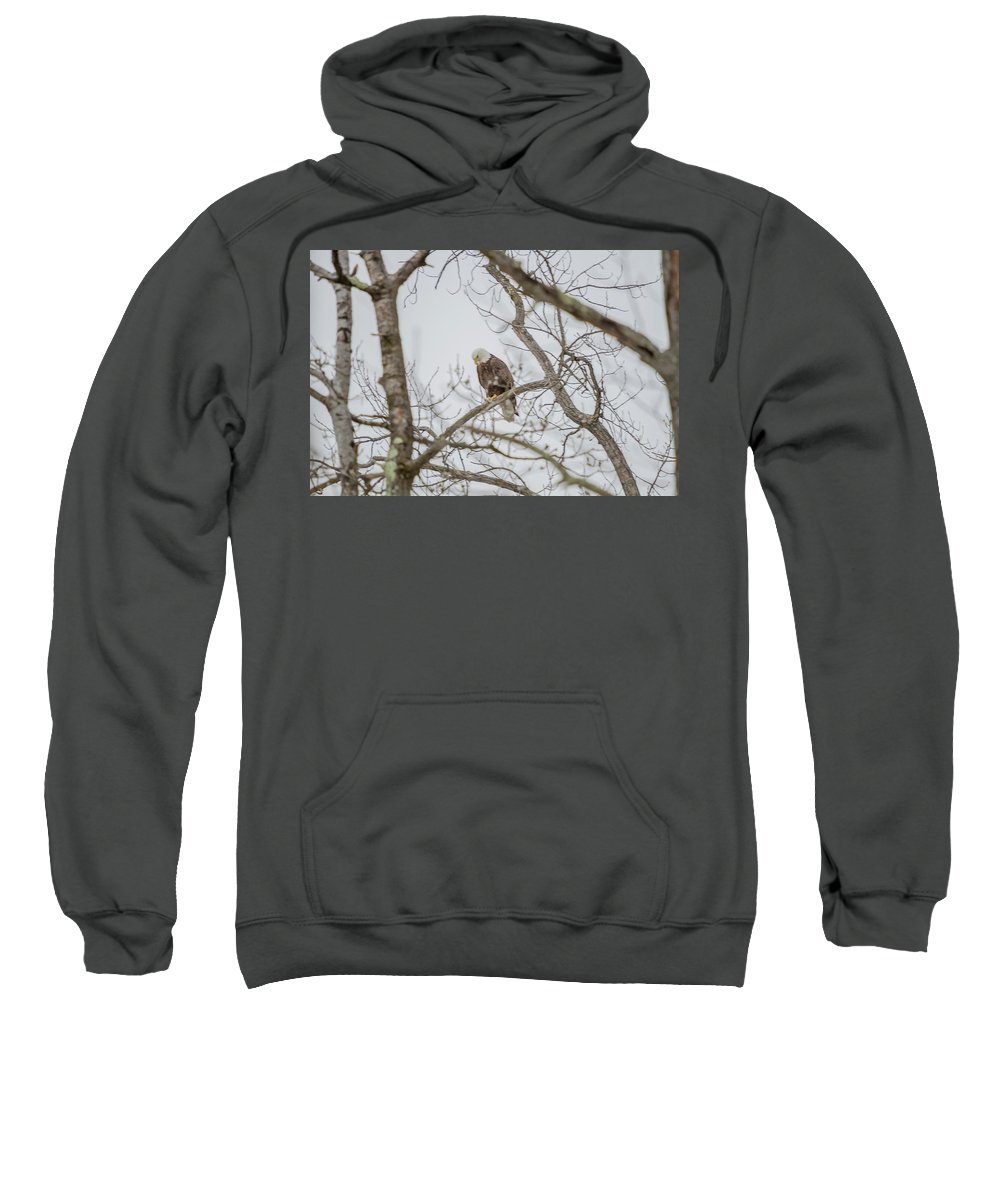 Eagle Sweatshirt featuring the photograph Bowing by Barbara Blanchard