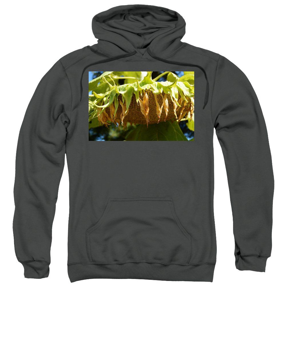 Bowing Sunflower Sweatshirt featuring the photograph Bowing Sunflower by Warren Thompson
