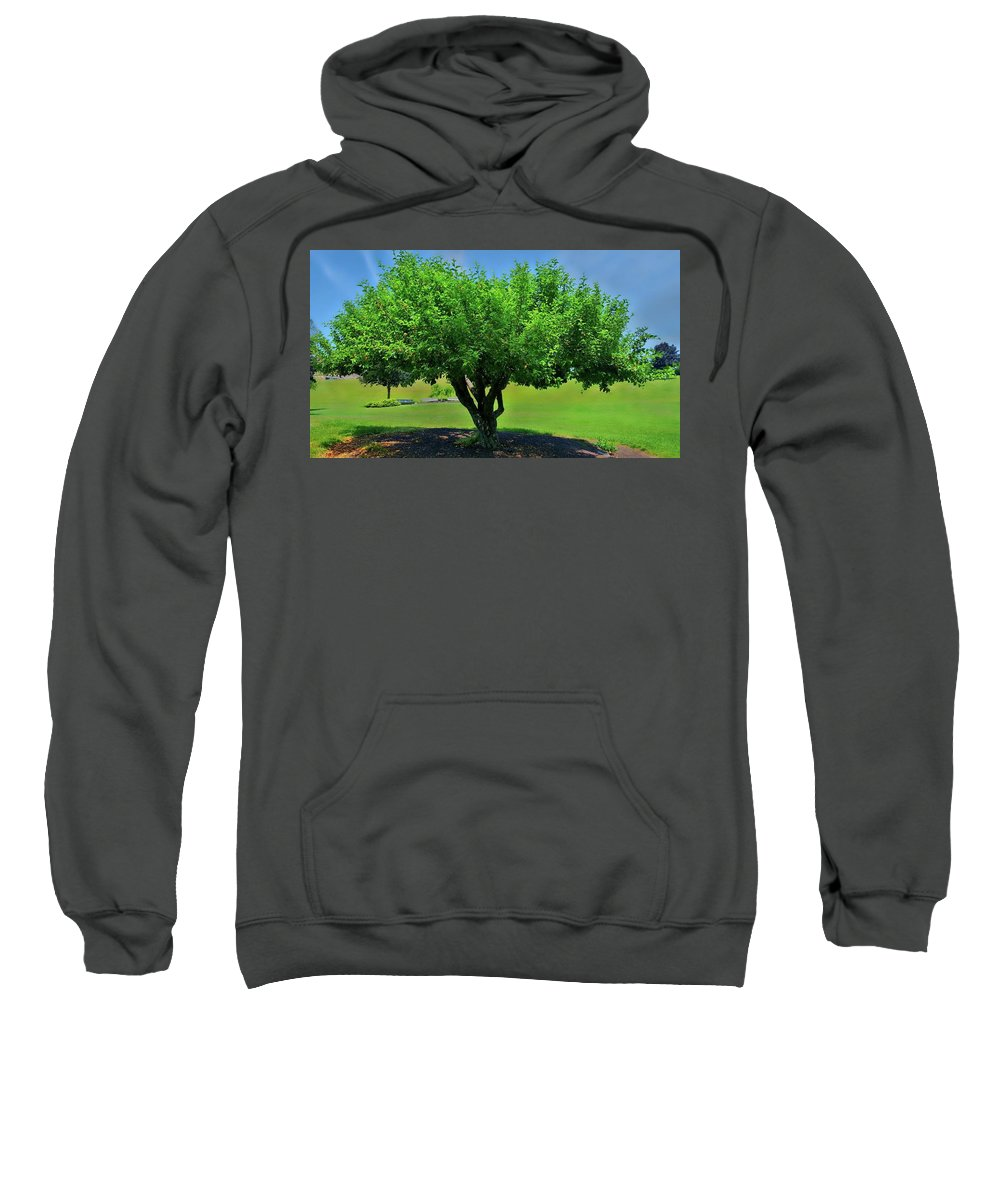 Tree Sweatshirt featuring the photograph Branching Out by Dani McEvoy