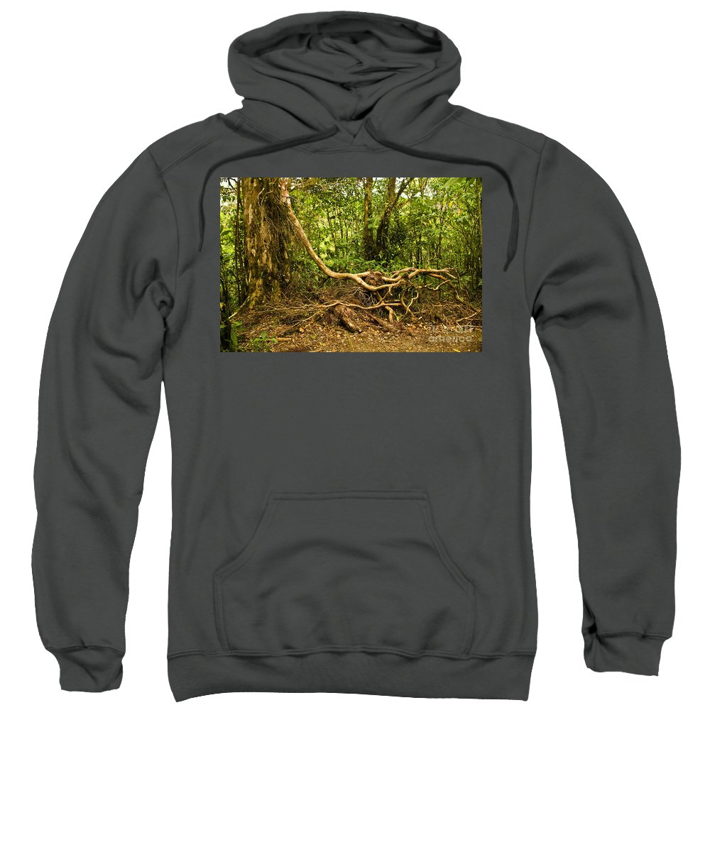 Tree Sweatshirt featuring the photograph Branching Out In Costa Rica by Madeline Ellis