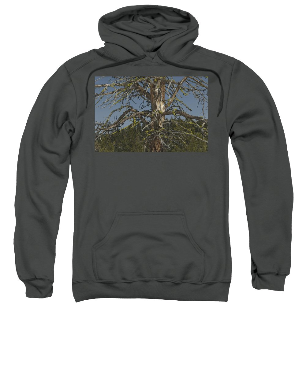 Tree Sweatshirt featuring the photograph Branching Out by Sara Stevenson