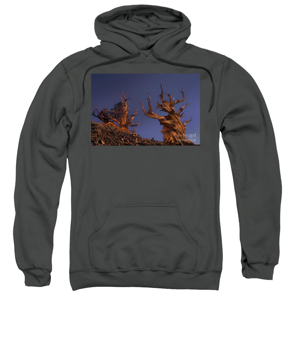 Bristlecone Pine Sweatshirt featuring the photograph Bristlecone Pines At Sunset With A Rising Moon by Dave Welling