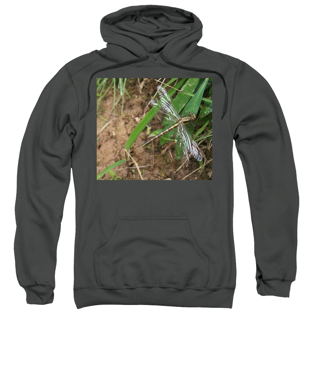 Dragonfly Sweatshirt featuring the photograph Brown Dragon by Sara Raber