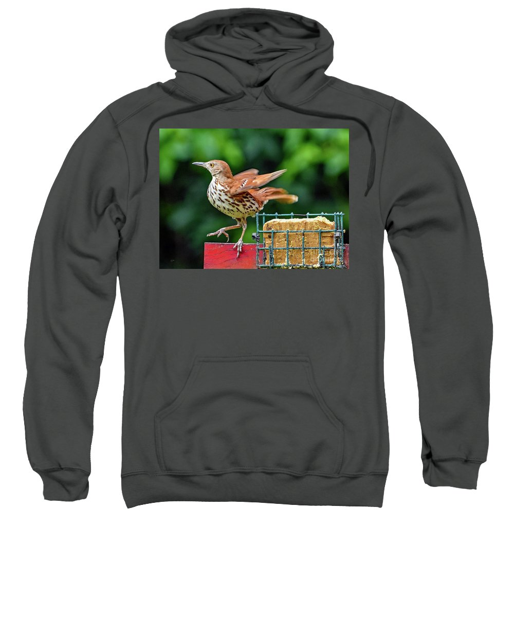 Nature Sweatshirt featuring the photograph Brown Thrasher by Bill And Deb Hayes