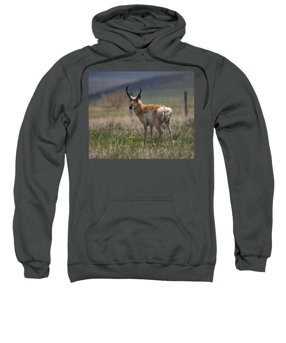 Buck Sweatshirt featuring the photograph Buck Antelope by Heather Coen