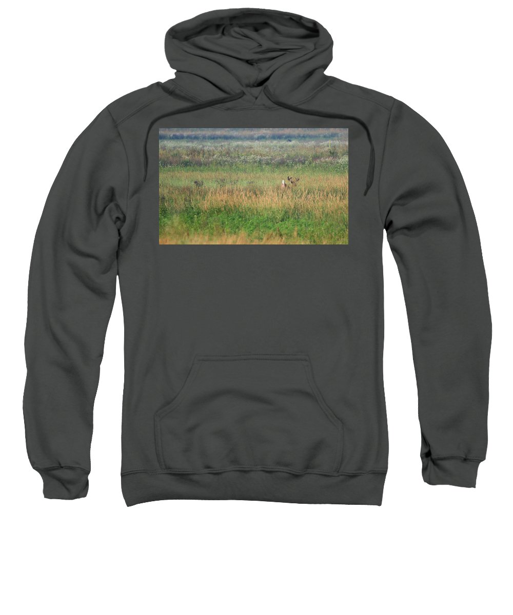 Whitetail Sweatshirt featuring the photograph Buck Running In Field by Brook Burling