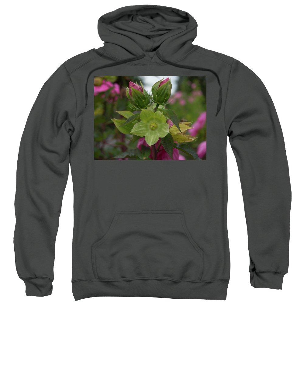 Flowers Sweatshirt featuring the photograph Buds by Kathy Benham