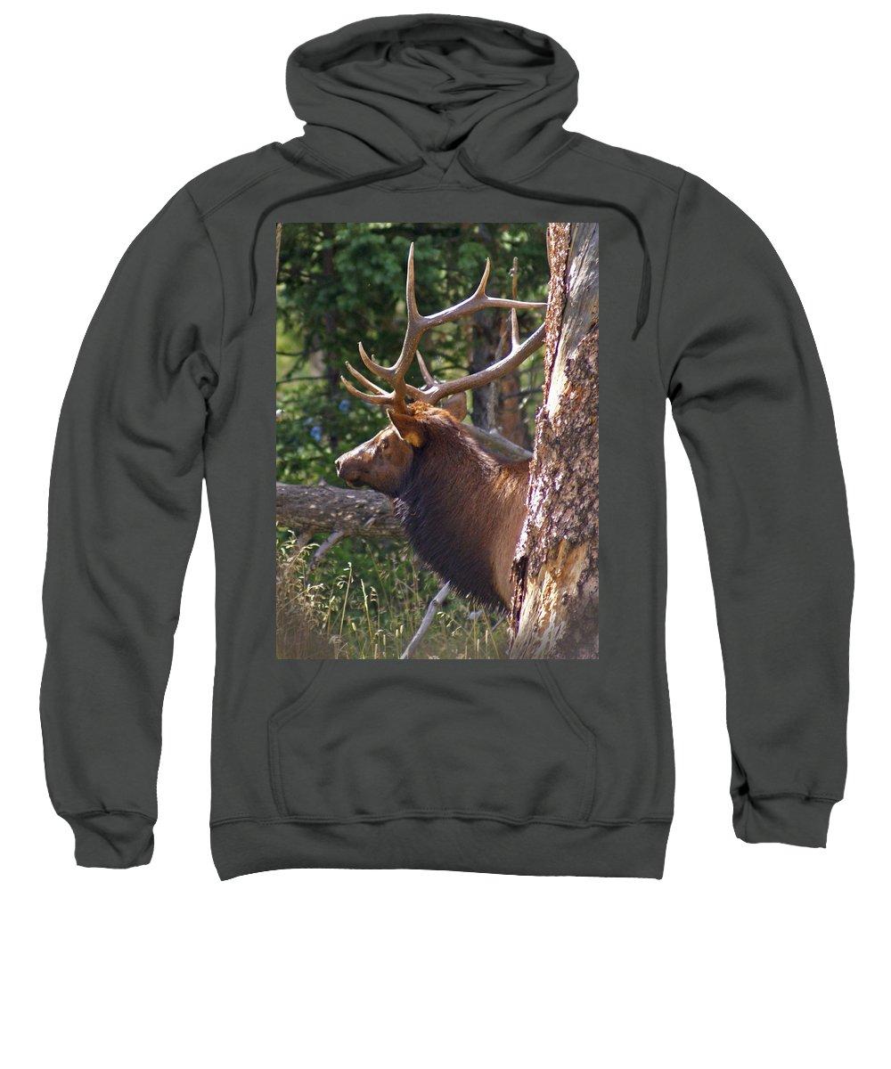 Elk Sweatshirt featuring the photograph Bull Elk 2 by Heather Coen