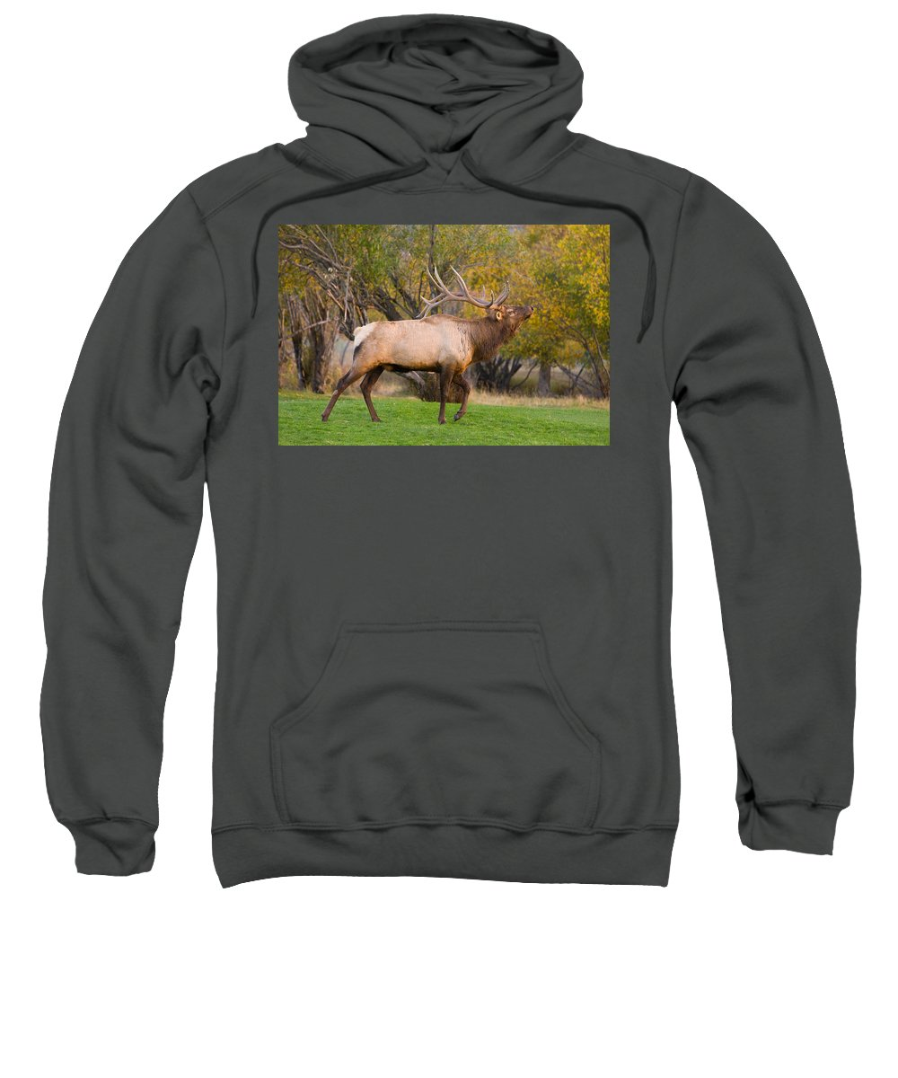Autumn Sweatshirt featuring the photograph Bull Elk In Rutting Season by James BO Insogna