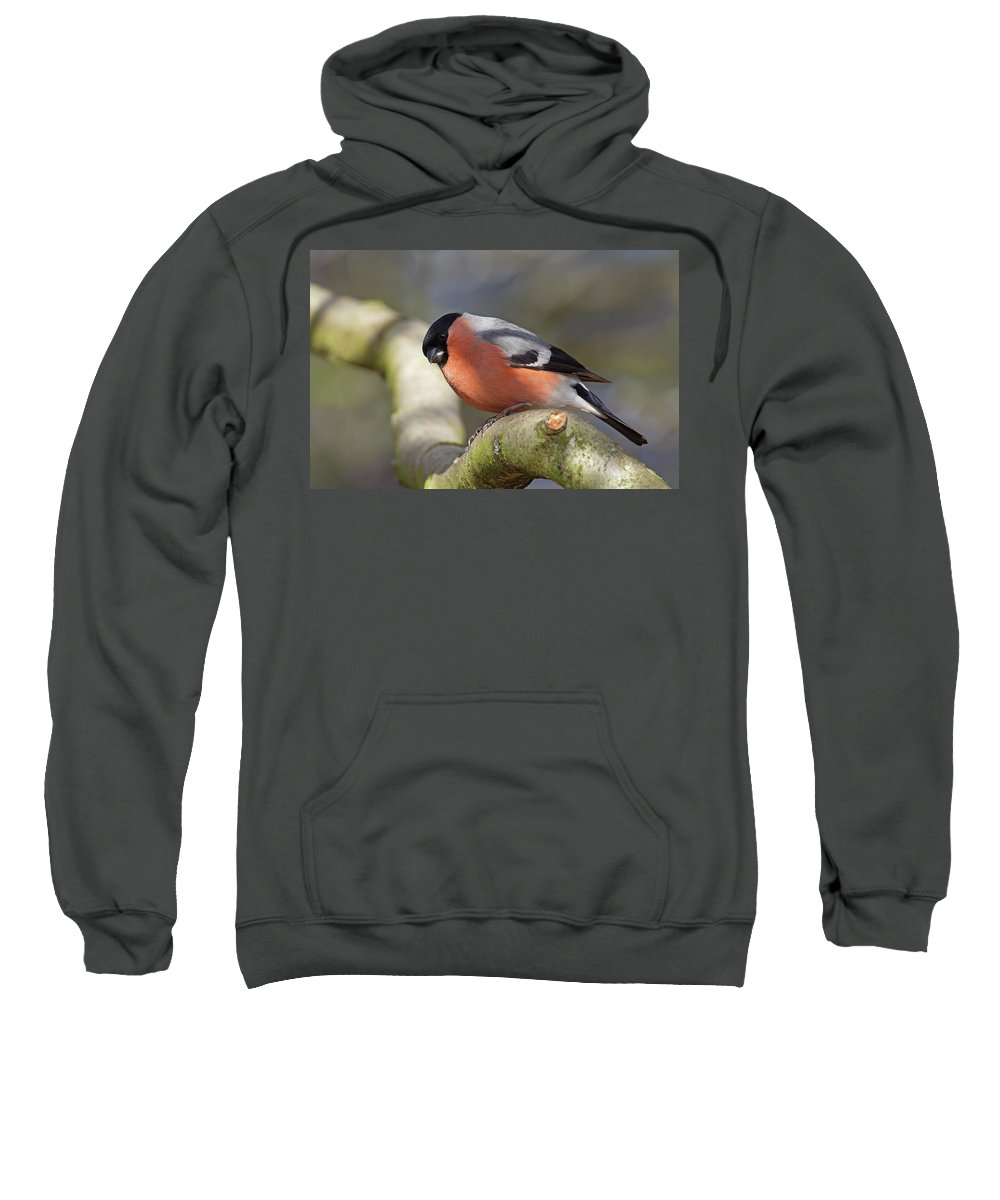 Birds Sweatshirt featuring the photograph Bullfinch by Bob Kemp