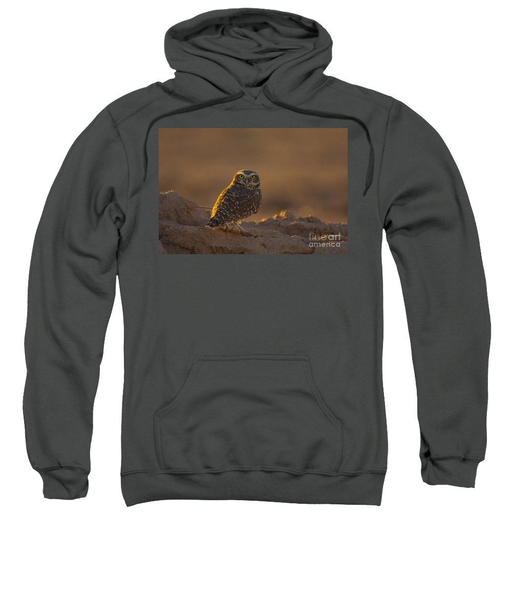 Burrowing Owl Sweatshirt featuring the photograph Burrowing Owl by Marie Read