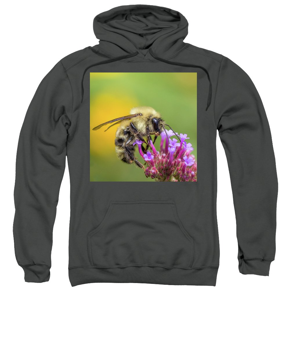 Bumble Bee Sweatshirt featuring the photograph Busy As A Bee by Christy Cox