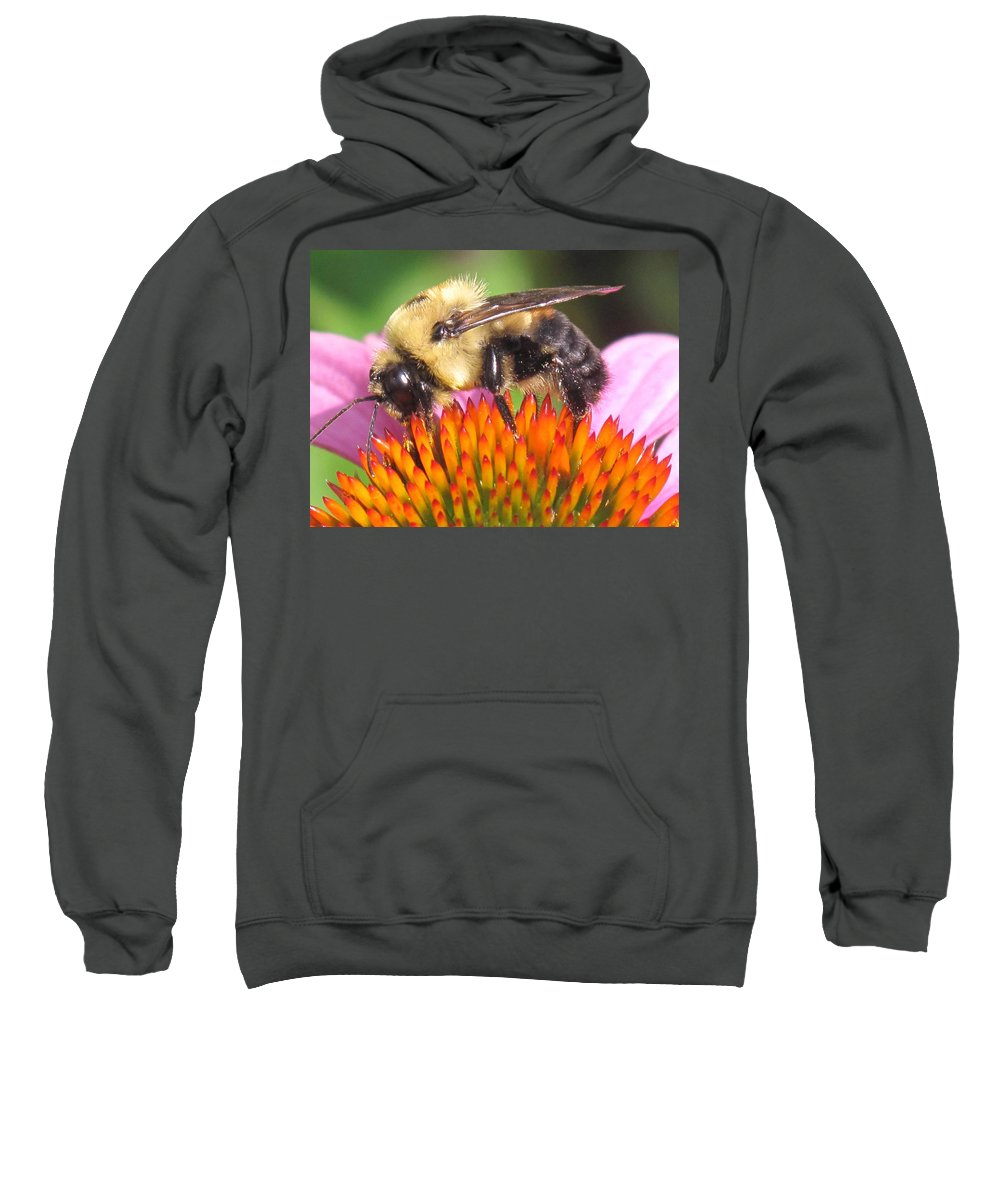 Bee Sweatshirt featuring the photograph Busy by Ian MacDonald
