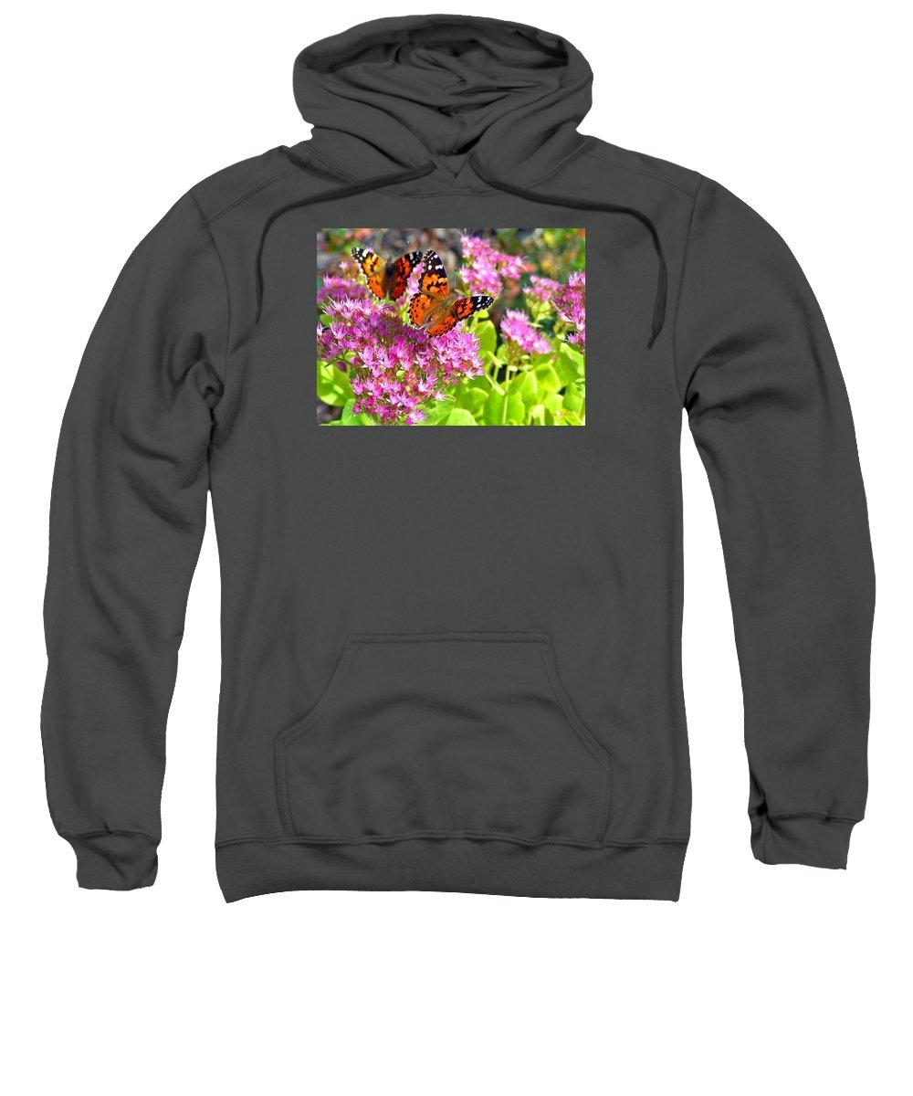 Butterflies Garden Colorado Nature Flowers Rocky Mountains Sweatshirt featuring the photograph Butterflies by George Tuffy