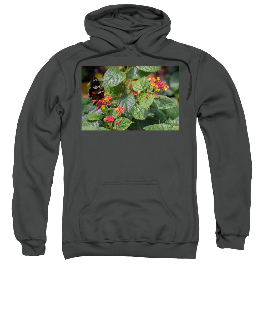Butterfly Sweatshirt featuring the photograph Butterfly 1 by Wesley Farnsworth