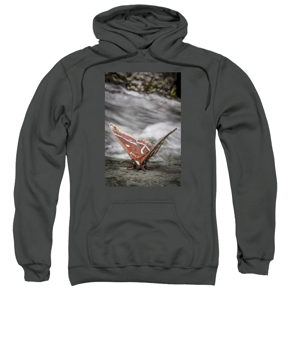 Sweatshirt featuring the photograph Butterfly 12 by Reed Tim