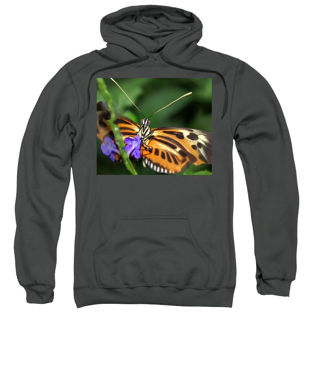 Butterfly Sweatshirt featuring the photograph Butterfly 2 Eucides Isabella by Heather Coen