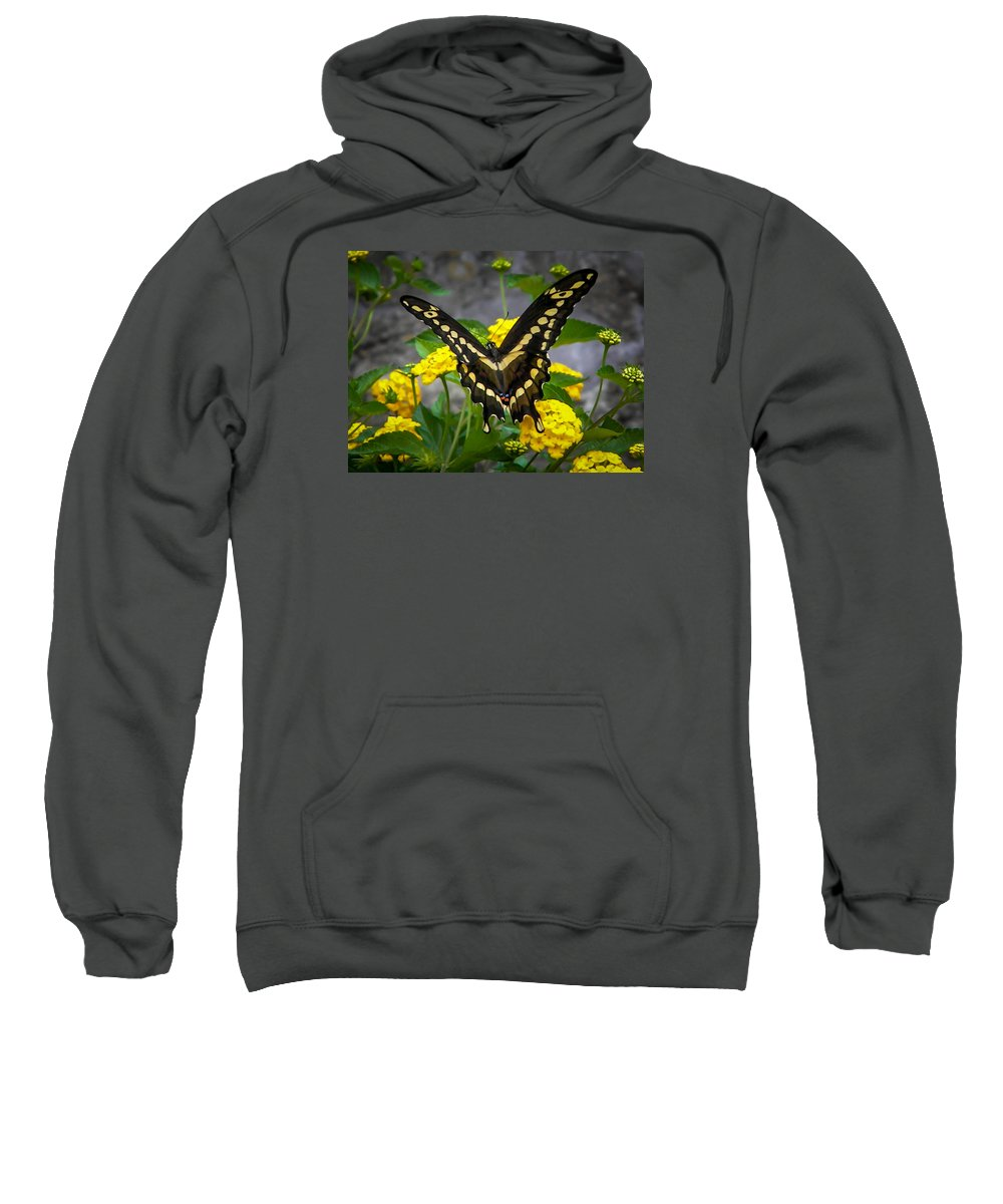 Sweatshirt featuring the photograph Butterfly 2 by Reed Tim