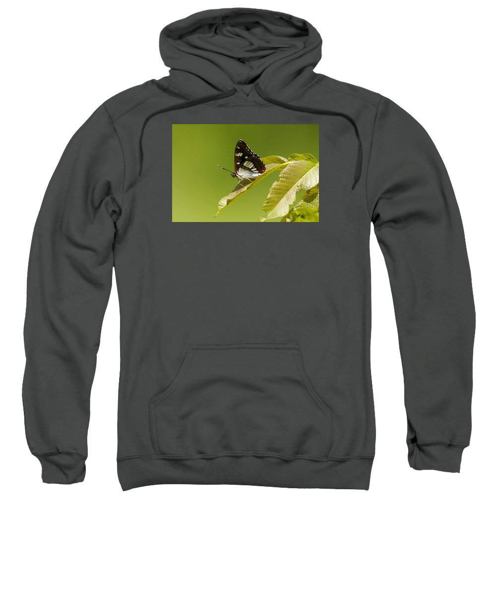 Nature Sweatshirt featuring the photograph Butterfly by Cliff Norton
