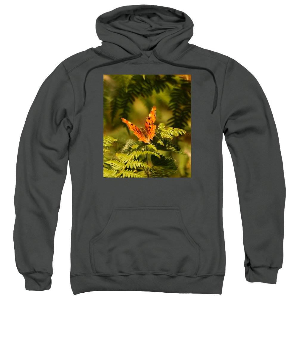 Butterfly Comma Fern Heath Wings Jagged Edges Insect Nature Wildlife Orange Brown Black Buff Markings Sweatshirt featuring the photograph Butterfly Comma by Jeff Townsend