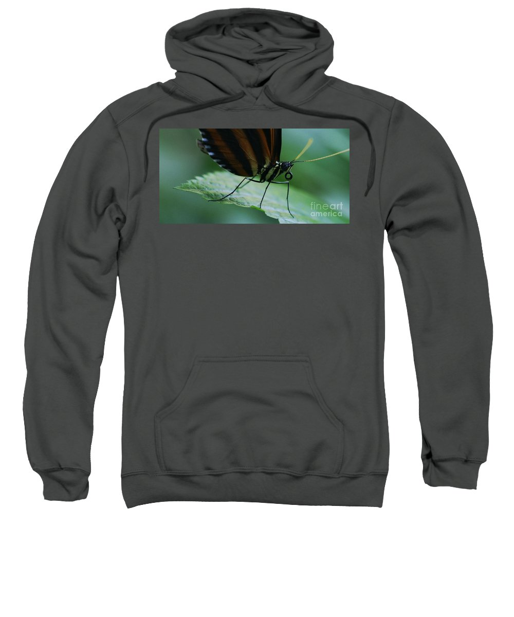 Butterfly Sweatshirt featuring the photograph Butterfly Leaf by Linda Shafer