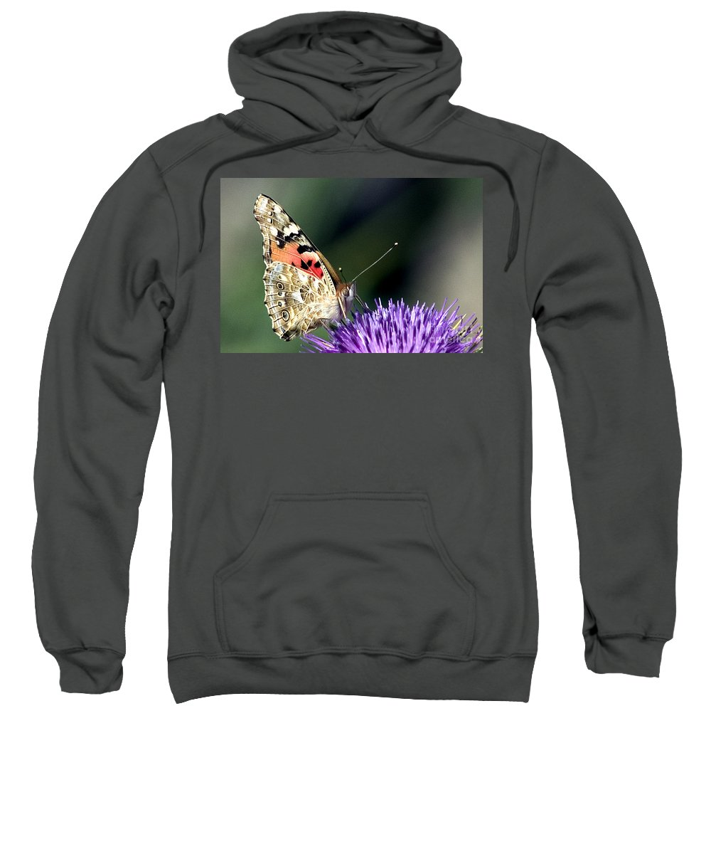 Butterfly Sweatshirt featuring the photograph butterfly on a Silybum marianum I by Nahum Budin