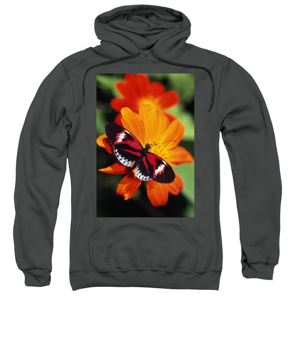 Animal Sweatshirt featuring the photograph Butterfly On Flower by Natural Selection Ralph Curtin
