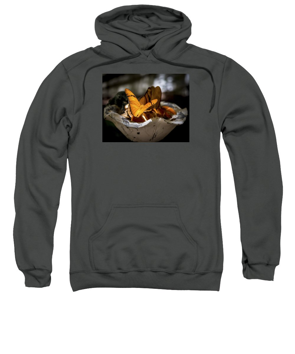 Sweatshirt featuring the photograph Butterfly by Reed Tim