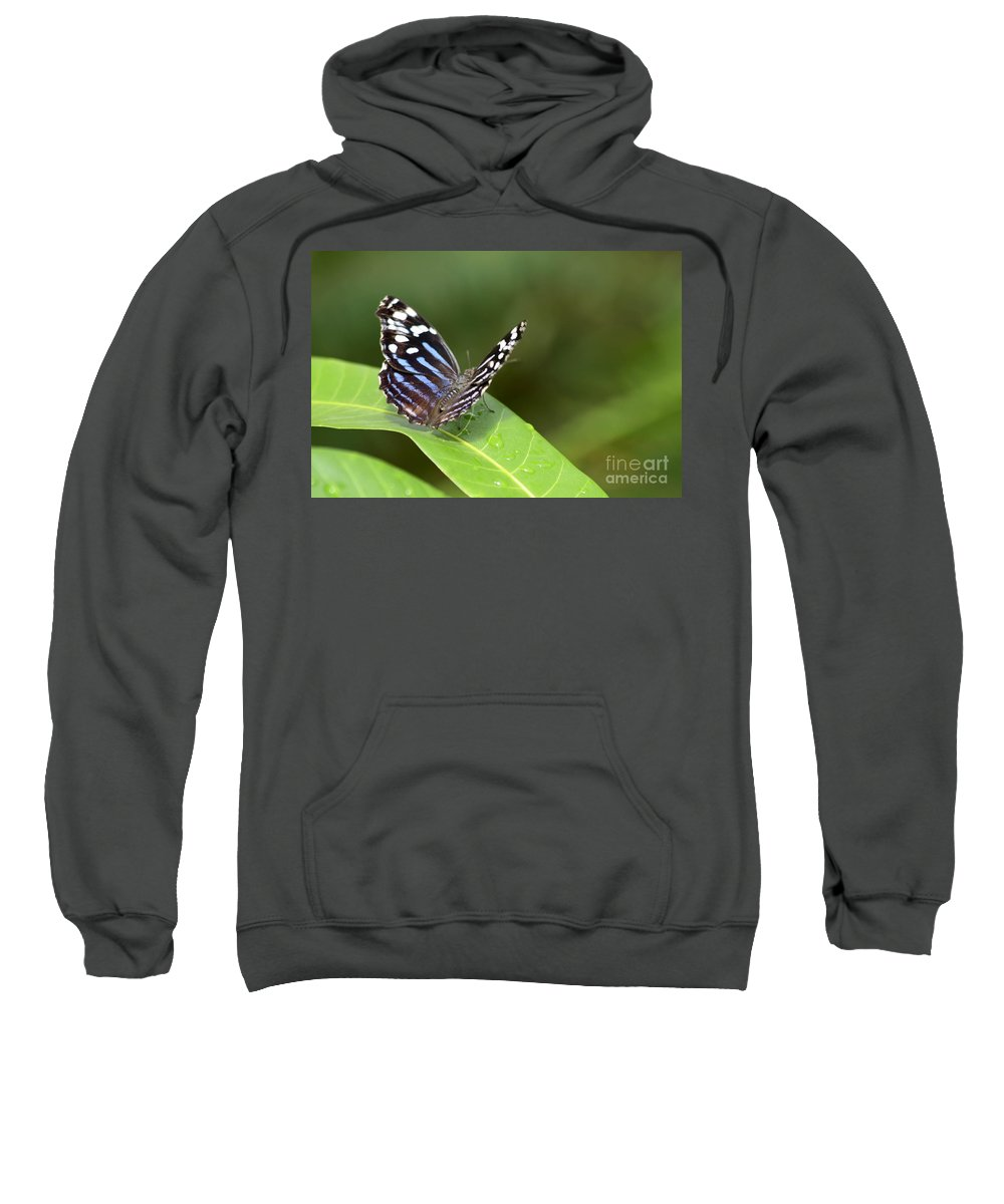 Butterfly Colorful Sweatshirt featuring the photograph Butterfly by Teresa Zieba